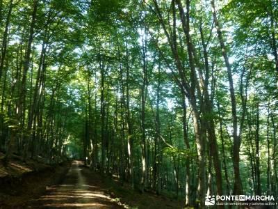 Hayedos Rioja Alavesa- Sierra Cantabria- Toloño;puente del pilar viajes ruta romana astorga viajes